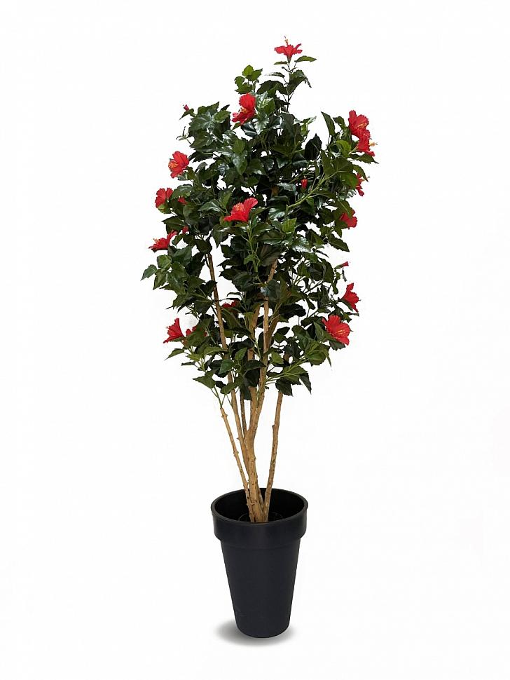 Гибискус китайский дерево цветущее в кашпо