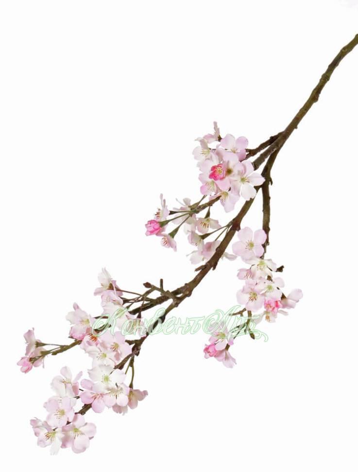 Цветок сакуры купить — 12